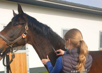 Aus aktuellem Anlass: Equine Herpesvirus 1 – Impfung bei Pferden